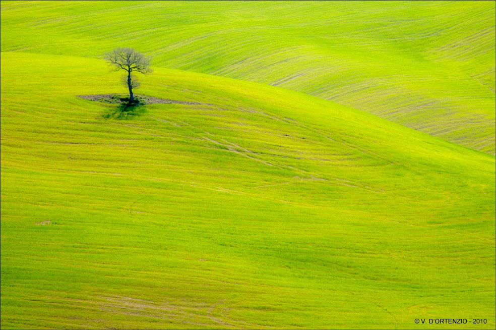 Čudno i usamljeno drveće - Page 12 Albero_solitario